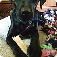 Adopt A Pet :: Evie (pending) - Coldwater, MI