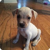 Adopt A Pet :: Stuart - Summerville, SC