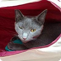 Adopt A Pet :: Bumble - Columbus, OH