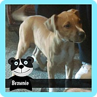 Adopt A Pet :: Brownie puppy - Des Moines, IA