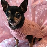 Chihuahua Mix Dog for adoption in Santa Monica, California - Lucy