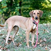 Adopt A Pet :: MISS KAYE - Portland, ME