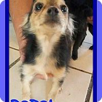 Adopt A Pet :: REBEL - Mount Royal, QC