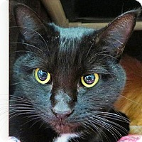 Adopt A Pet :: Loretta - Sherwood, OR
