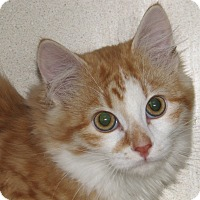 Adopt A Pet :: Gideon - Ruidoso, NM