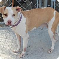 Adopt A Pet :: Mercedes - Newport, NC