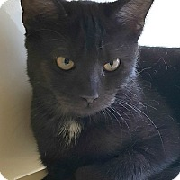 Adopt A Pet :: Ty - Chesapeake, VA
