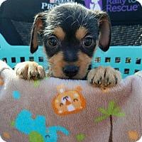 Adopt A Pet :: Charm  PENDING ADOPTION - Seaford, DE