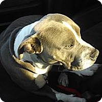 Adopt A Pet :: BUBBA - Portland, OR