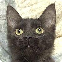 Adopt A Pet :: Zainy - Winchester, CA