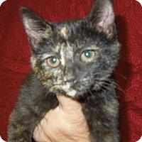 Adopt A Pet :: Farrah - Medina, OH