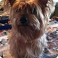 Adopt A Pet :: Bitsy - Redding, CA
