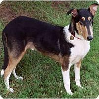 Adopt A Pet :: Shine - Gardena, CA