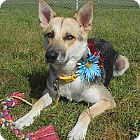 Adopt A Pet :: Maggie Mae - Lockhart, TX