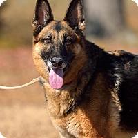 Adopt A Pet :: Samba - Dacula, GA