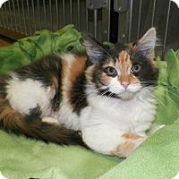 Adopt A Pet :: Ruka - Dover, OH