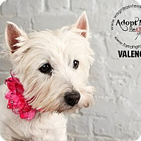 Adopt A Pet :: Valencia-adoption pending - Omaha, NE