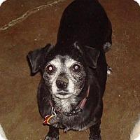 Adopt A Pet :: Buggy Boo - Tucson, AZ