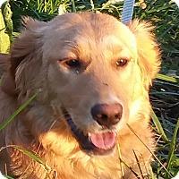 Adopt A Pet :: Jack - Staunton, VA
