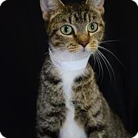 Adopt A Pet :: Sweet Melissa - Bradenton, FL
