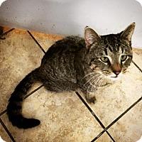 Adopt A Pet :: Bamboo - Hudson, NY