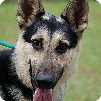 Adopt A Pet :: Wesson AD 07-02-16 - Preston, CT