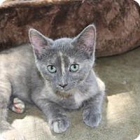 Adopt A Pet :: Jazzie - Tyler, TX