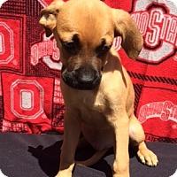 Adopt A Pet :: Steffi - East Sparta, OH
