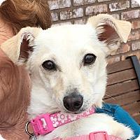 Adopt A Pet :: Bonnie - San Marcos, CA