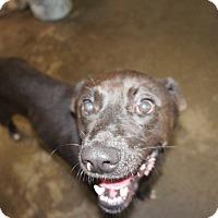 Adopt A Pet :: Clark* - Henderson, NC