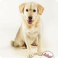 Adopt A Pet :: Max - Gillsville, GA