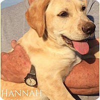 Adopt A Pet :: Hannah - DeForest, WI