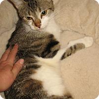 Adopt A Pet :: Annie - Queensbury, NY