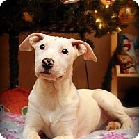 Adopt A Pet :: Snow - Seabrook, NH
