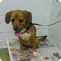 Adopt A Pet :: ROSETT - Atlanta, GA