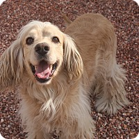 Adopt A Pet :: Hunter - Henderson, NV