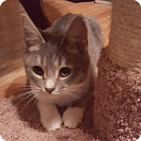 Adopt A Pet :: Jax - Brattleboro, VT