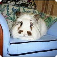 Adopt A Pet :: Clooney - Newport, DE