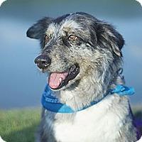 Adopt A Pet :: Ewok - PENDING - Savannah, GA
