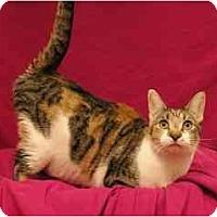 Adopt A Pet :: Sassy - Sacramento, CA
