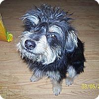 Adopt A Pet :: Romeo - Andrews, TX