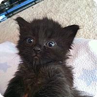 Adopt A Pet :: Shizzle - Union, KY
