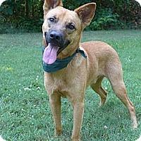 Adopt A Pet :: Howie - Mocksville, NC