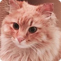 Adopt A Pet :: Tennessee - Ogallala, NE
