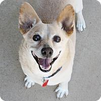 Adopt A Pet :: Doolie - 22 lbs. Easy dog! - Bellflower, CA