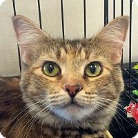 Adopt A Pet :: Hazel - Winchester, CA