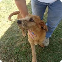 Adopt A Pet :: Tramp - West Warwick, RI