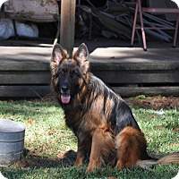 Adopt A Pet :: Quento - Houston, TX