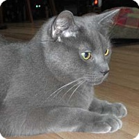 Adopt A Pet :: Yukon - Verdun, QC