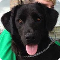 Adopt A Pet :: Chubb AD 01-16-16 - Preston, CT